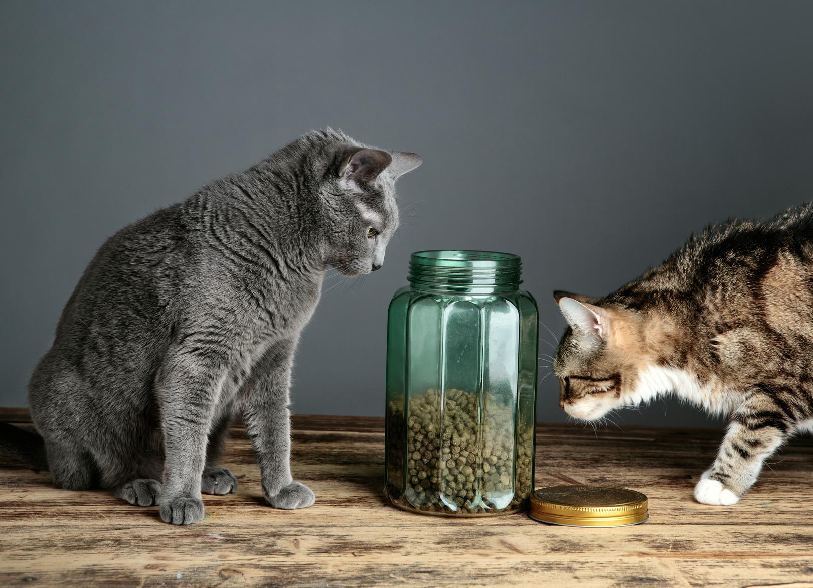 Cibo per gatti consigli per un micio sano zoolandia family for Cosa mangia il gatto