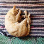 Cibo per gatti: cosa mangia il tuo micio?
