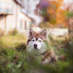 antiparassitari-per-cani