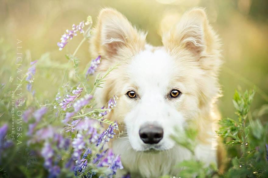 antiprassitari-per-cani-principi-attivi