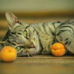 frutta-per-gatto