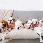 vaccinazione-del-cucciolo