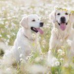 Antiparassitari per cani e gatti: la guida per scegliere quello giusto!