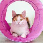 L'importanza del TUNNEL per gatti.