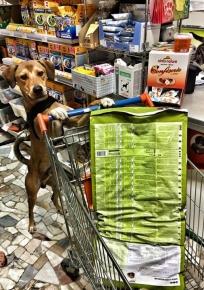 negozio animali firenze