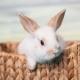 Siamo intelligenti, socievoli e curiosi … siamo i conigli!