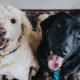 Pettorine per cani: quale scegliere?