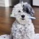 Pulizia dei denti dei cani: qualche consiglio per un sorriso smagliante!