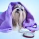 Come prendersi del nostro cane: la toelettatura in casa!
